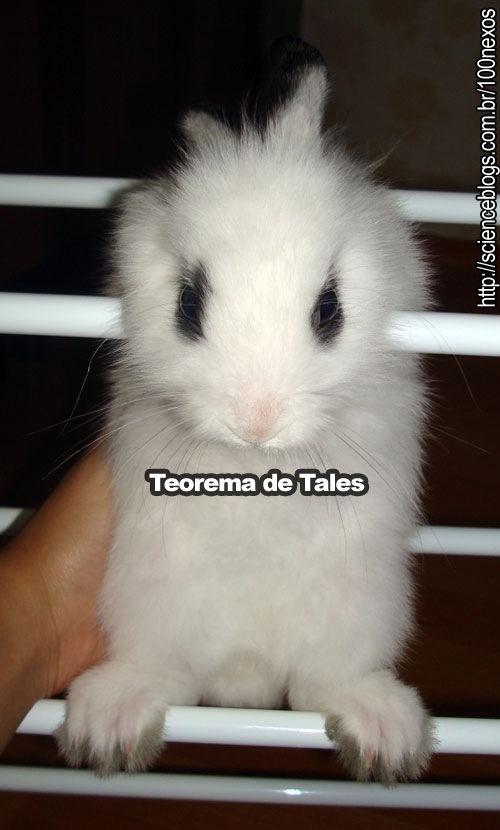 bunny_tales