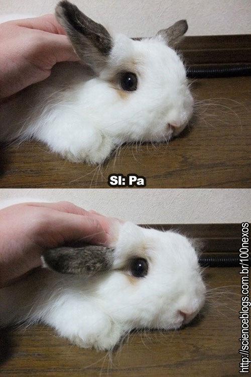 bunnypascal