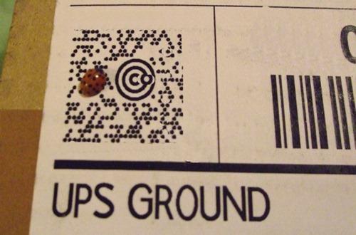 ladybug_ups_crop-560