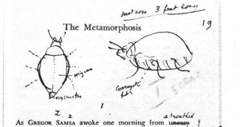 metamorfose32