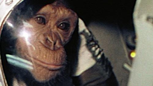 1090_ham-un-chimpanze-dans-l-espace_1606