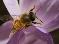 Imagem obtida de www.eol.org