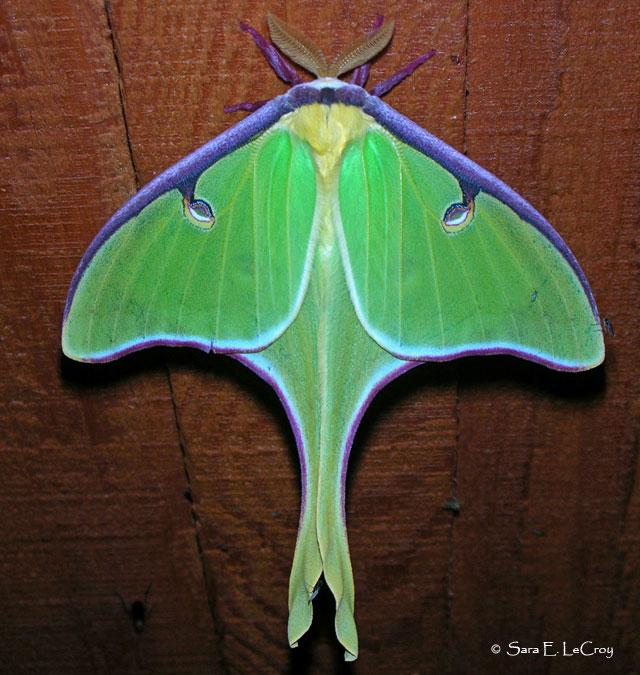 butterfliesandmoths dot org.jpg