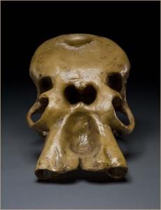 Crânio de elefante. O orifício central único é onde insere-se a tromba, mas confundia os antigos parecendo a cabeça de um ciclope