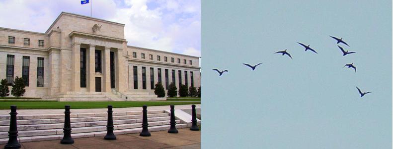 O que o Federal Reserve americano tem a ver com marrecos migratórios?