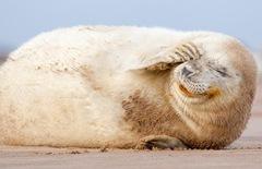 foca superprotetora