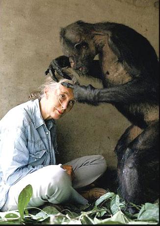 Jane Goodall (à esquerda, nunca é demais reforçar) Obtido em: www.famousscientists.com