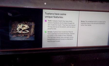 Display demonstrando as diferenças entre o crânio de um tuatara e o de um lagarto