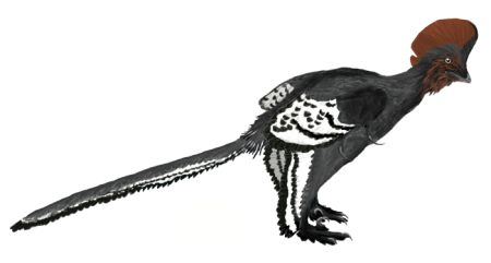 Anchiornis_martyniuk.jpg