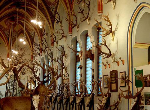 antlers1.jpg