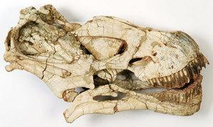 cranio620.jpg