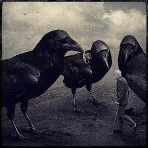crows (Small).jpg