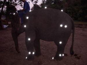 thailand2006-mocap-elephant1.jpg
