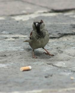 cigarette-butt-bird_Víctor Argaez
