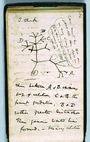 darwin_first_tree_2.jpg