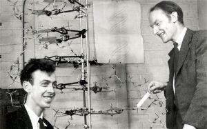 James Watson e Francis Crick com seu modelo de DNA em 1953