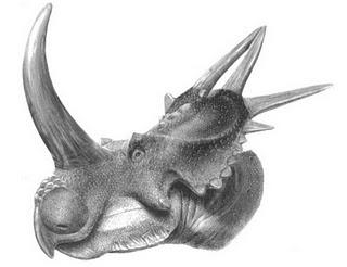 >O Ano dos Ceratopsia !! – Parte 2
