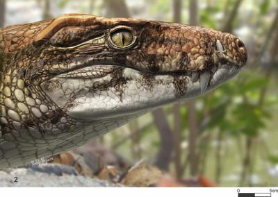 >O Brasil pré-histórico era realmente dos crocodilos…