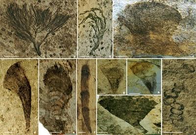 >Fauna de Lantian – Uma nova assembléia fóssil ediacarana