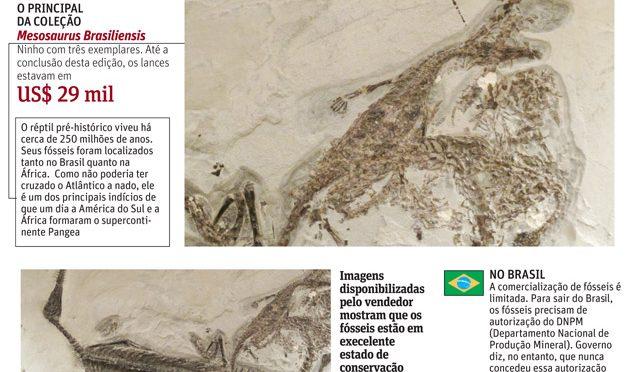 Fósseis brasileiros à venda no e-bay