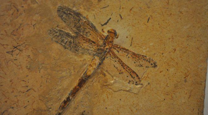 Paleontólogos brasileiros saem em defesa do Brasil e do patrimônio fossilífero da nação