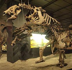 O Mapinguari não é mais uma lenda: Preguiça-gigante é encontrada viva na Amazônia!!