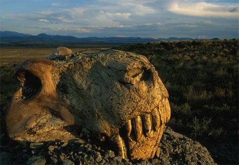Em Busca do Permiano (Parte 3) – A raiz dos ecossistemas modernos