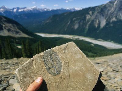Como procurar fósseis?