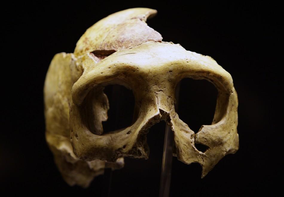 Crânio de Neanderthal