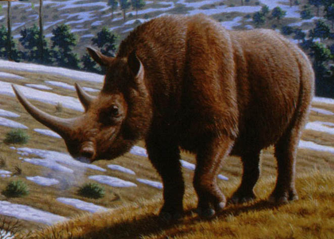 rinoceronte_lanoso