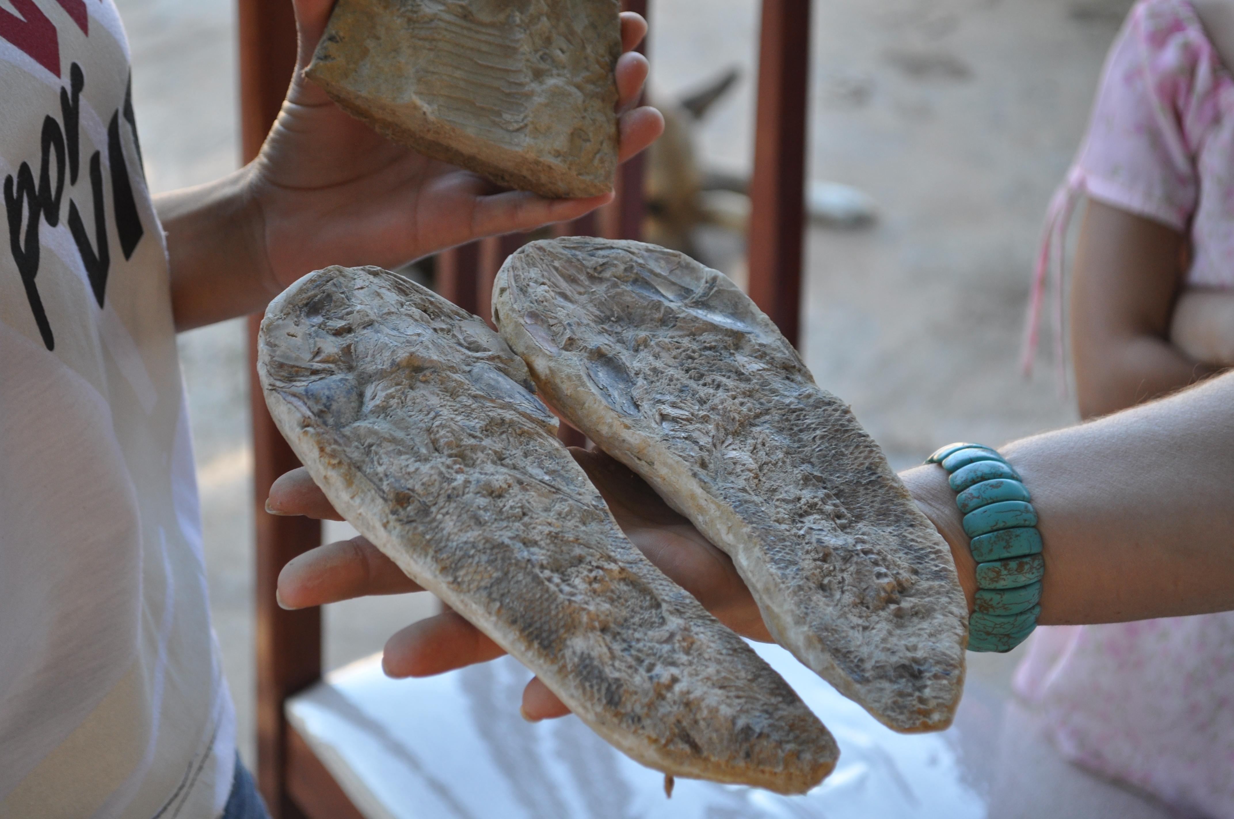 """Pedra-de-peixe"" - concreção fossilífera da Fm. Romualdo. Foto de Aline Ghilardi."