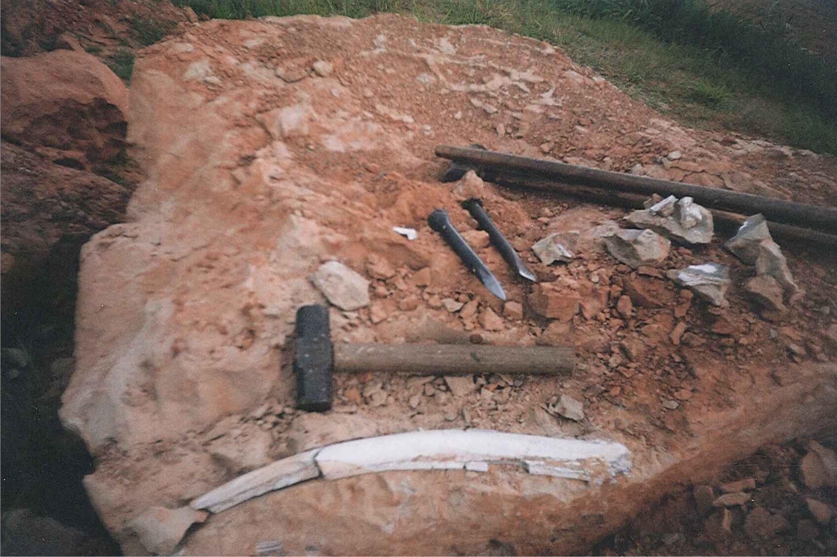 Costela encontrada junto aos materiais de Brasilotitan.