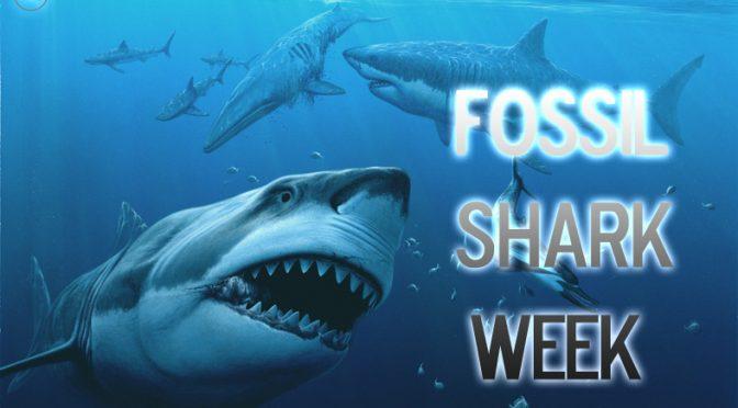 Semana do Tubarão FÓSSIL, no Colecionadores de Ossos