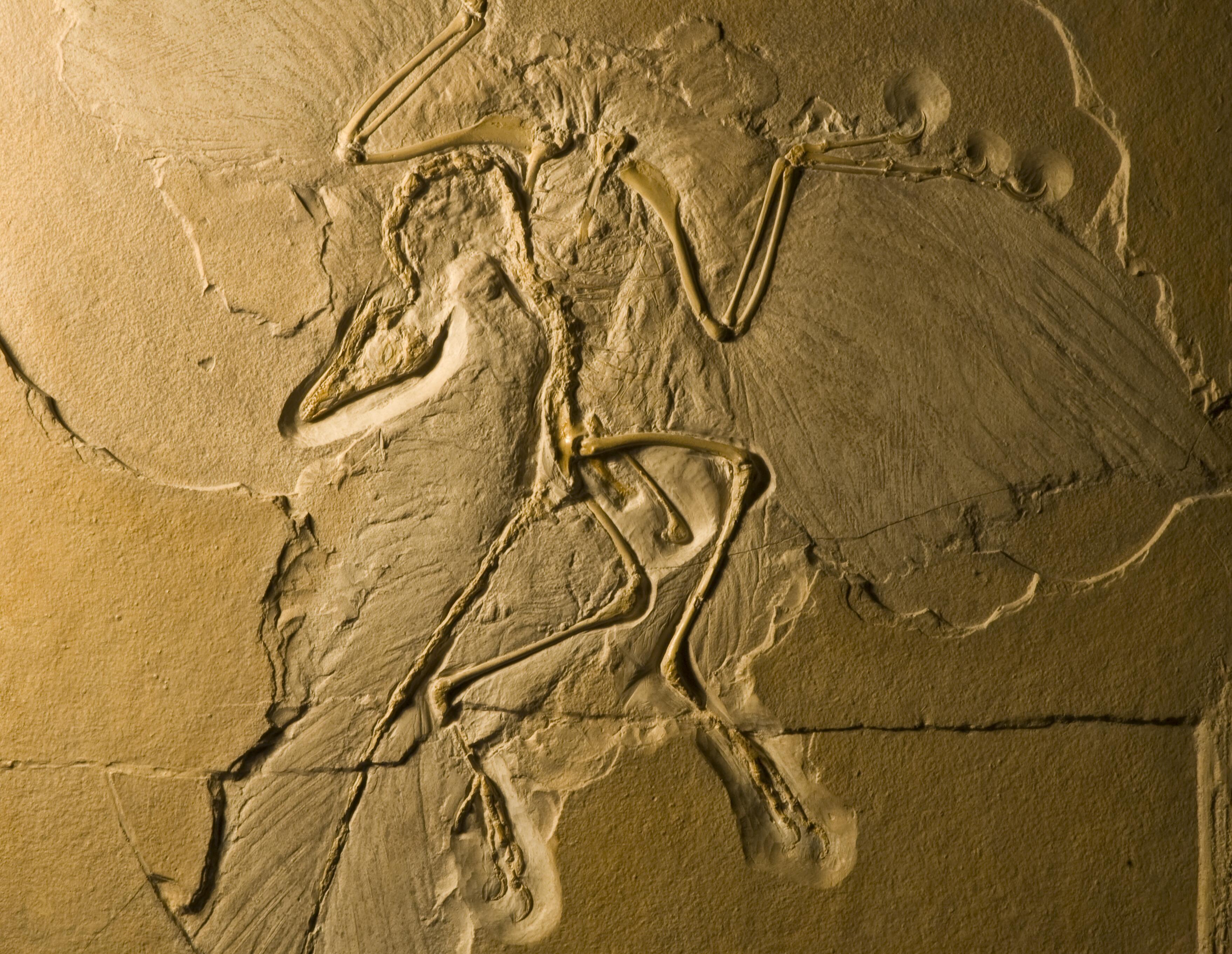 archaeopteryx_DSC_8270