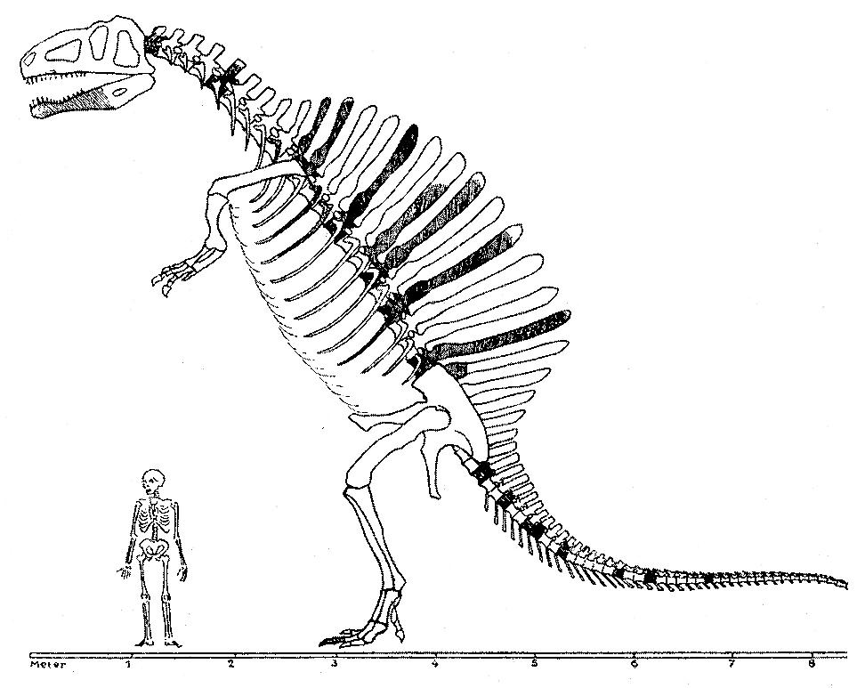 Spinosaurus_Monograph