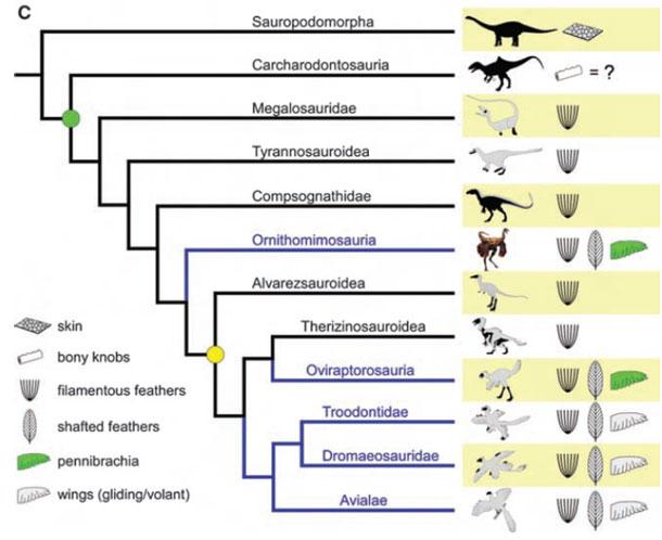 Feathered_phylogeny