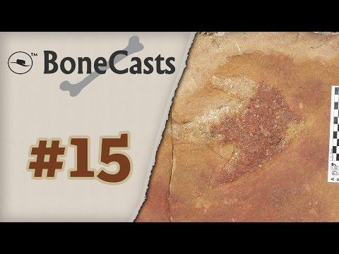 BoneCast #15 – Paleoicnologia: o estudo dos traços fósseis