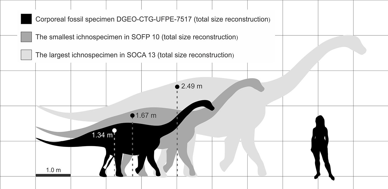 Em preto, a reconstituição do tamanho do titanossauro encontrado. Imagem retirada do artigo de Ghilardi et al. (2016).