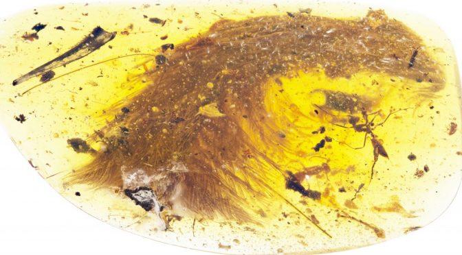 Uma cauda de dinossauro com penas encontrada em âmbar de 99 milhões de anos