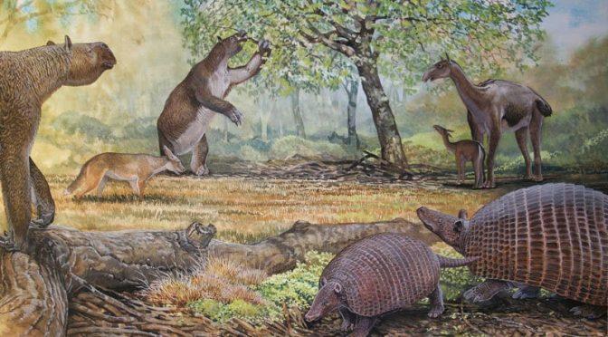 Uma fauna muito, muito grande, que chamamos de Mega