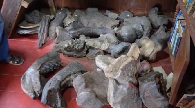 Coleções informais de fósseis