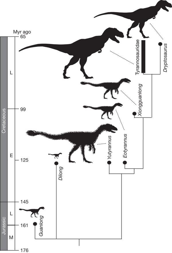 Relações de parentesco entre Yutyrannus, Dilong e Tyranosauridae.