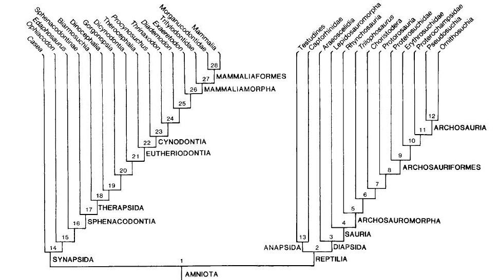 Esta imagem possuí um atributo alt vazio; O nome do arquivo é Fig.-3.-Árvore-Gauthier-fossilrecent.jpg