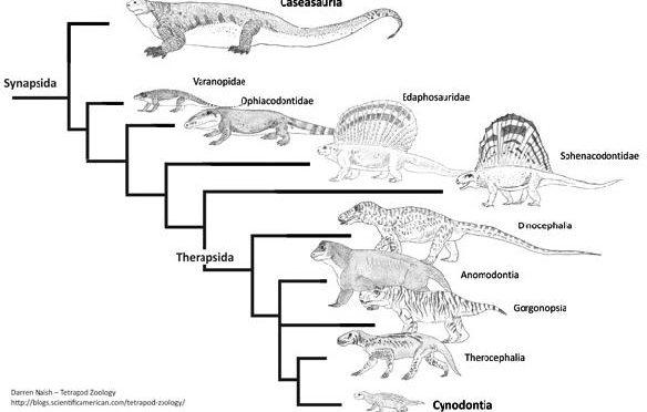 Hipóteses filogenéticas dos Amniotas e a importância dos fósseis na compreensão da evolução da vida