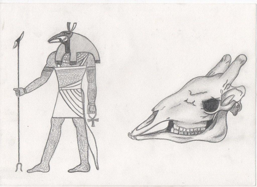 Figura 4: A esquerda a representação de Set de acordo com os antigos egípcios e à direita o desenho de um crânio de um espécime de girafídeo (Lorena Pontes Lima).