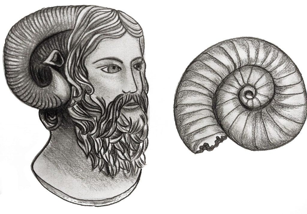 Figura 5: Á esquerda uma representação de Júpiter Ammon e à direita um amonita.