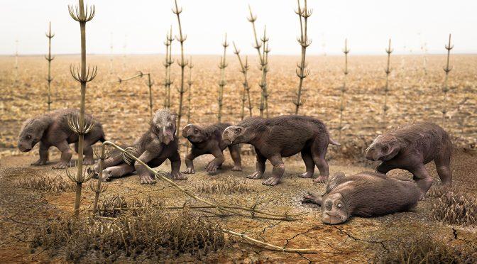 Paleontólogos encontram fósseis de seis filhotes de antigos répteis no Rio Grande do Sul