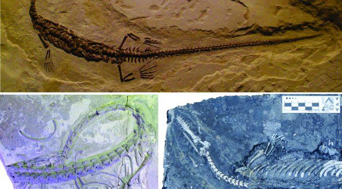 Mesossauros e microanatomia: o que a estrutura interna dos ossos pode nos revelar?