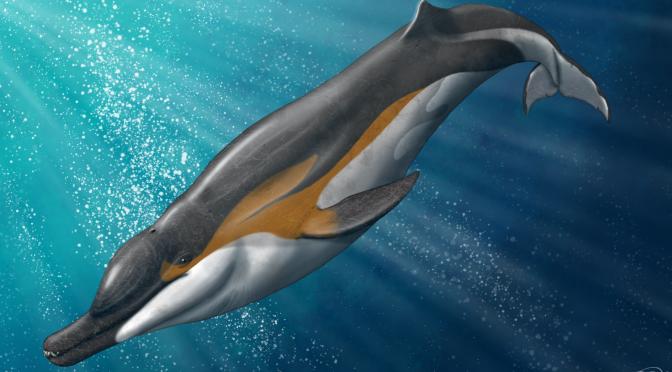 Um grande golfinho predador e a evolução dos cetáceos modernos