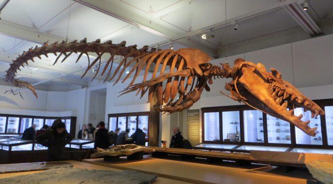 O devorador de baleias ancestrais